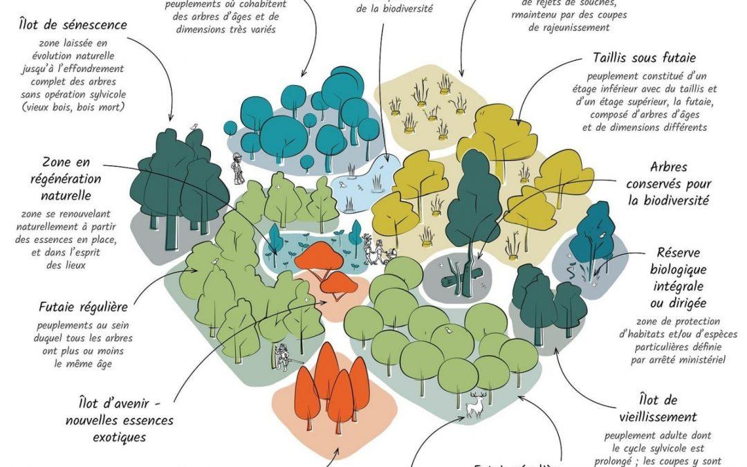 Quel avenir pour les forêts françaises ?
