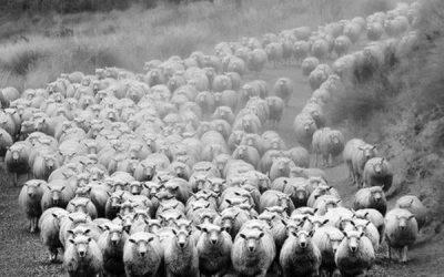 Comment créer un mouton
